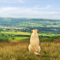 Pendle-Hill-sml